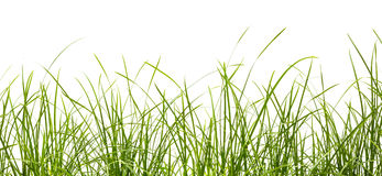 Fresh spring green grass panorama Stock Image