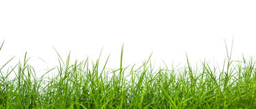 Fresh spring green grass panorama Royalty Free Stock Images