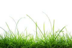 Fresh spring green grass panorama isolated Stock Photo