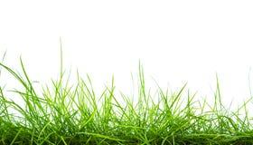 Fresh spring green grass panorama isolated Stock Photo