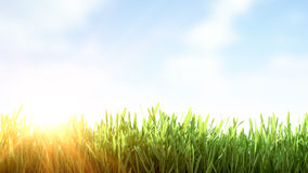 Fresh spring green grass Stock Image