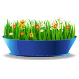 Fresh spring green grass in a pot. And flower Royalty Free Stock Images