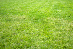 Fresh spring green grass. Before rain Stock Photos