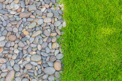 Fresh spring green grass Stock Photo