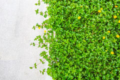 Fresh spring green grass with rock Royalty Free Stock Photo