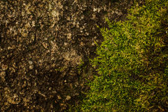 Fresh spring green grass with rock texture Stock Photography