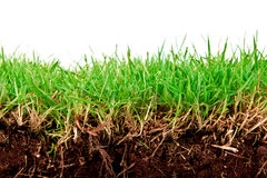Fresh spring green grass with soil. Royalty Free Stock Images
