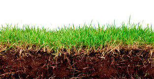 Fresh spring green grass with soil. Stock Photo