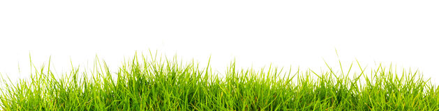 Fresh spring green grass with soil Royalty Free Stock Image