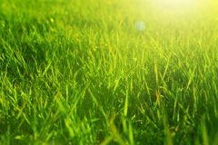 Fresh spring green grass and sun. Landscape in summer stock photo