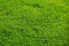 Fresh spring green grass texture Stock Photo