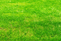 Fresh spring green grass texture from golf or soccer course. Stock Images
