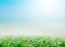 Fresh spring green grass under beautiful blue sky Royalty Free Stock Photo