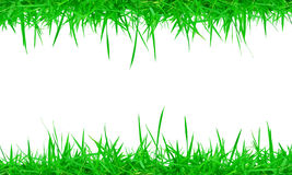 Fresh spring green grass on white background Stock Image