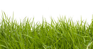 Fresh spring green grass on white Stock Image