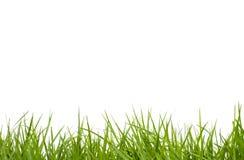 Fresh spring green grass on white Royalty Free Stock Photos
