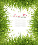 Fresh spring green grass on white background Royalty Free Stock Images