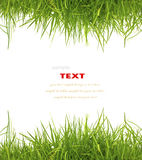 Fresh spring green grass on white background Stock Images