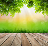 Fresh spring green grass and wood floor with green leaf. Royalty Free Stock Photography