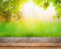 Fresh spring green grass and wood floor Stock Photos