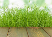 Fresh spring green grass with wood floor. Fresh spring green grass with green and wood floor. Natural background Royalty Free Stock Photography