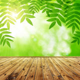 Fresh spring green leaf Stock Photography