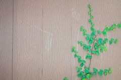 Fresh spring green grass and leaf plant over wood fence background royalty free stock photos