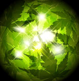 Fresh spring green leafs abstract background Royalty Free Stock Photos