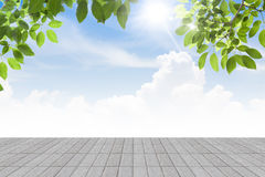 Fresh spring green leaves  bule sky with  concrete floor isolate. Fresh spring green leaves  bule sky with concrete Royalty Free Stock Photo