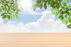 Fresh spring green leaves  bule sky with  wood floor Royalty Free Stock Image