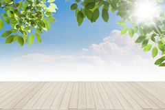 Fresh spring green leaves bule sky with wood floor royalty free stock photo