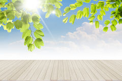 Fresh spring green leaves  bule sky Royalty Free Stock Image