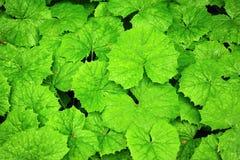 Fresh spring green leaves Royalty Free Stock Photos
