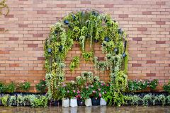 Fresh spring green leaves plant over brick wall background Stock Photo