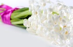 Fresh Spring Hyacinth Stock Photo