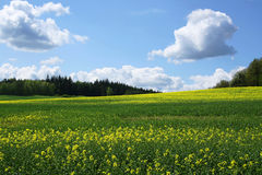 Fresh spring landscape Stock Images