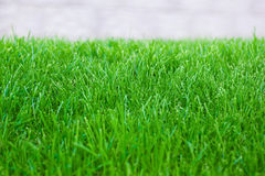 Fresh spring lawn green grass Stock Image