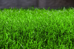 Fresh spring lawn green grass Stock Photos