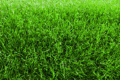 Fresh spring lawn green grass for background Stock Images