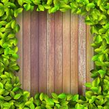 Fresh spring leaf plant over wood. + EPS10 Royalty Free Stock Photo