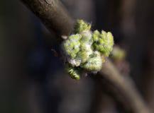 Fresh spring leaves Stock Photos