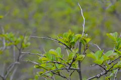 Fresh spring leaves on tree Stock Photography