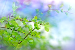 Fresh spring leaves Stock Image