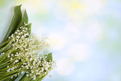 Fresh spring Light, Lilly of the valley flowers and leaves bouquet isolated on on green garden background. Selective focus Royalty Free Stock Photo