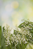 Fresh spring Light, Lilly of the valley flowers and leaves bouquet isolated on on green garden background. Selective focus Stock Image