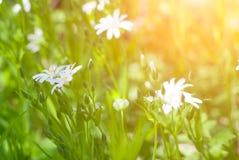Fresh Spring meadow Royalty Free Stock Photo