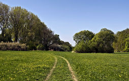 Fresh spring meadow with trees and clear sky in Poodri Royalty Free Stock Images