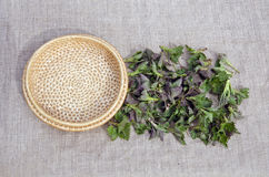 Fresh spring medical neetle herb for salad on linen cloth Stock Photos