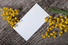 Fresh spring mimosa close up with white business card on old gra Stock Images