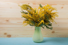 Fresh spring mimosa in vase close up Royalty Free Stock Images